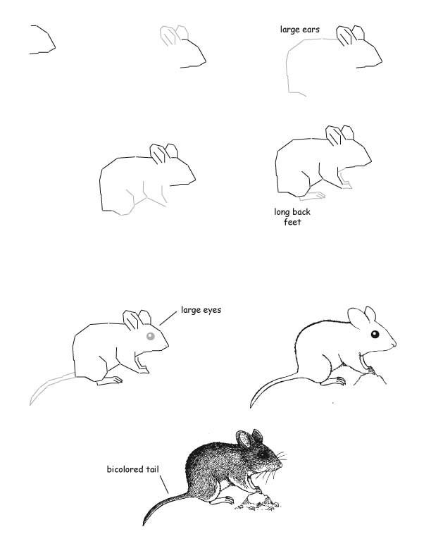 Рисунок карандашом цветным целующий мышонок