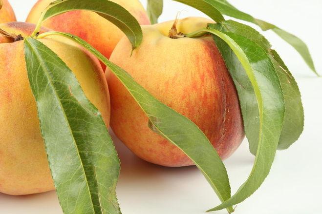 каштана почему у абрикоса листья желто зеленые сделать небольшой, простой