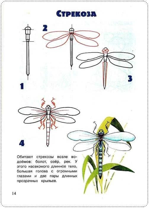 Как нарисовать стрекозу