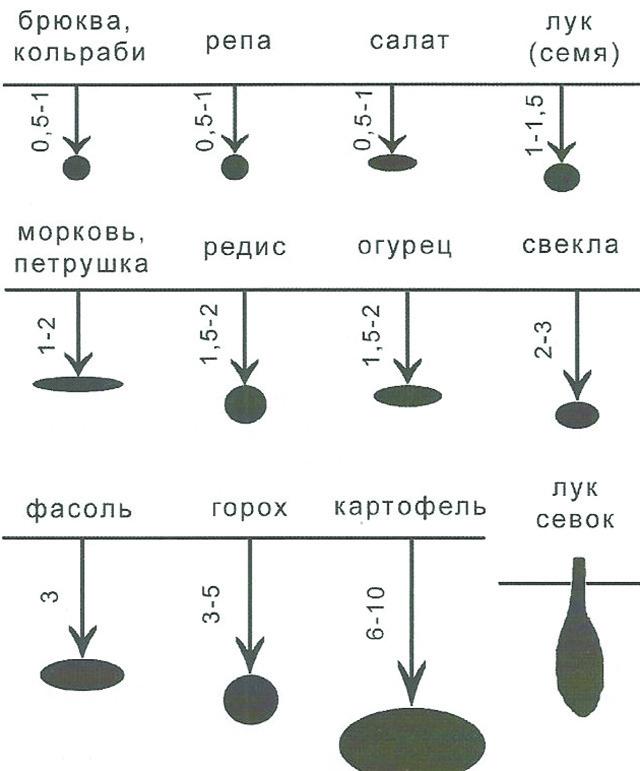 Схема посадки тыквы кабачками