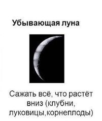 Что сажают на растущей луне 79