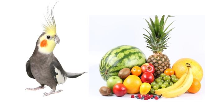Какие фрукты можно попугаю корелла
